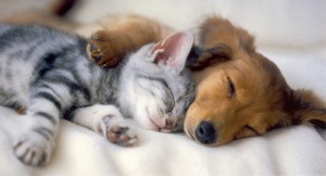 cute-puppies-and-kittens